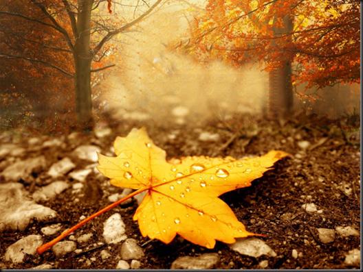 5363043-season-autumn-wallpapers_293511_large